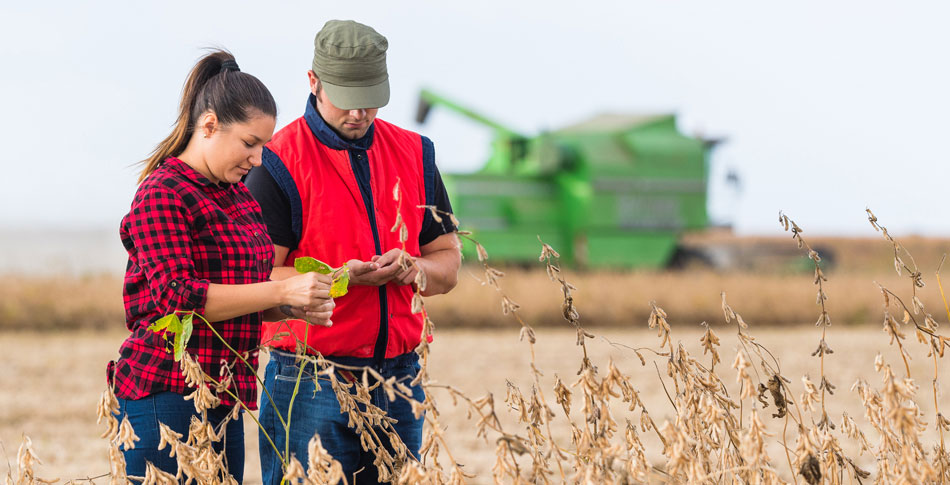 Man and woman standing in a field looking at their hands. Farm equipment in the background.