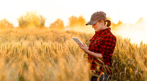 Woman in a field looking at a tablet
